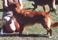 BIS unghundsklass - Foto: Lena Toftling