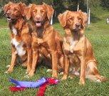 De tre hundarna som tog hem jakthornet - Foto: Anette Björgell
