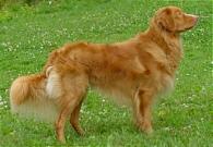 BIS unghundsklass - Foto: Anita Wahlberg